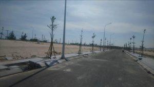 cây xanh tại cam ranh city gate
